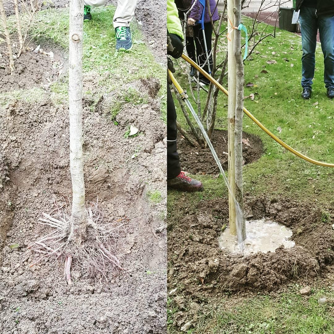 La saison de plantation des nouveaux arbres a commenc !hellip